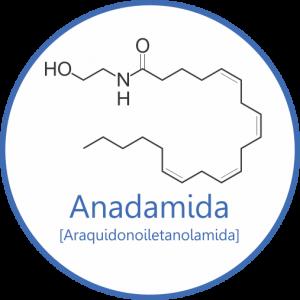 Molécula de Araquidonoiletanolamida.