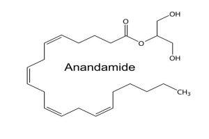 Anandamida (AEA)
