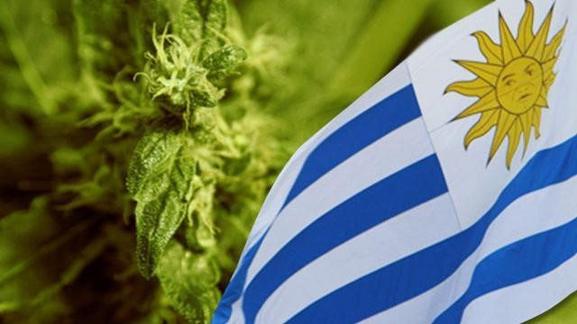 Uruguay becomes the first Latin American country to legalize the use of cannabis for medicinal and recreational purposes