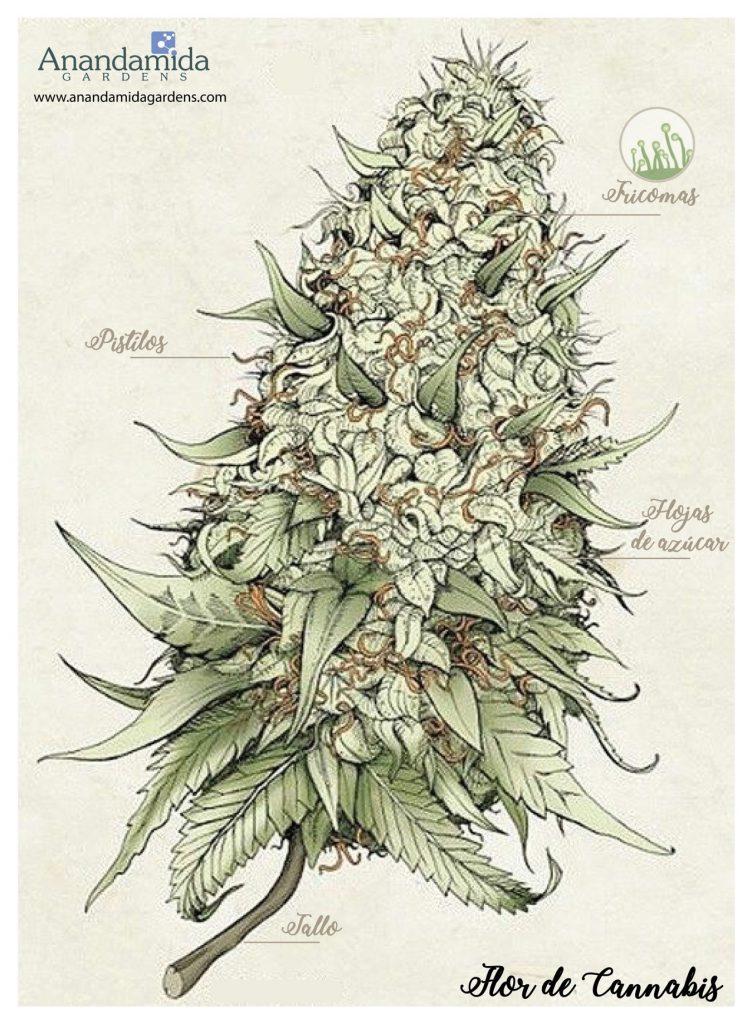 Anatomía de la planta 2