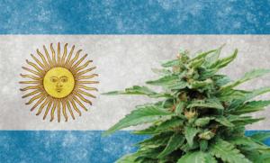 Argentina aprobó una nueva reglamentación sobre el cannabis medicinal