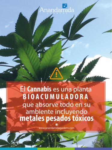 Planta Bioacumuladora
