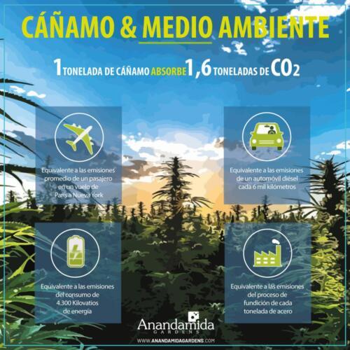 Cáñamo (Hemp) y Medio Ambiente