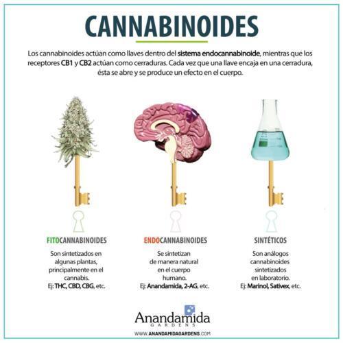 Tipos de Cannabinoides