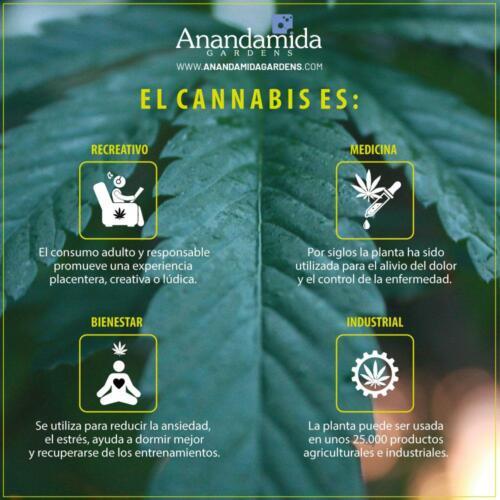 Cannabis y Bienestar