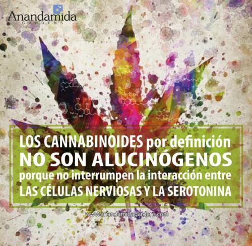 El Cannabis no es alucinógeno