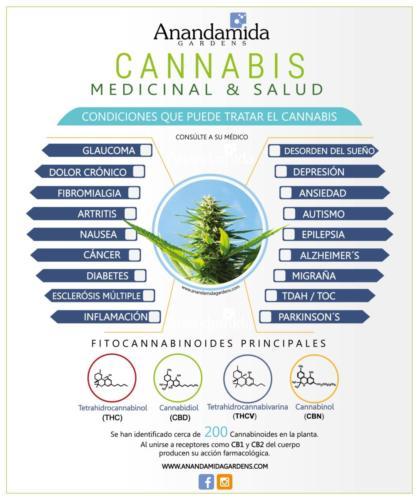Enfermedades y Cannabinoides