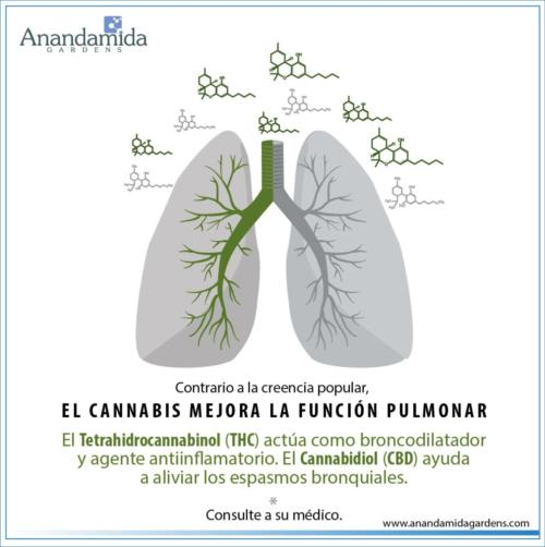 Función Pulmonar