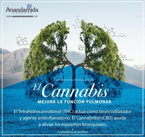 Cannabis y Función Pulmonar