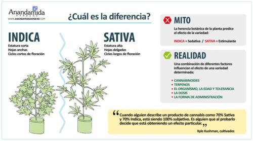 Diferencia Indica vs. sativa