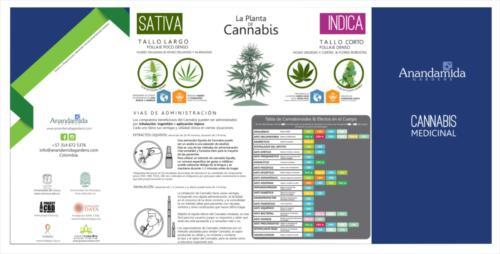 La planta de Cannabis