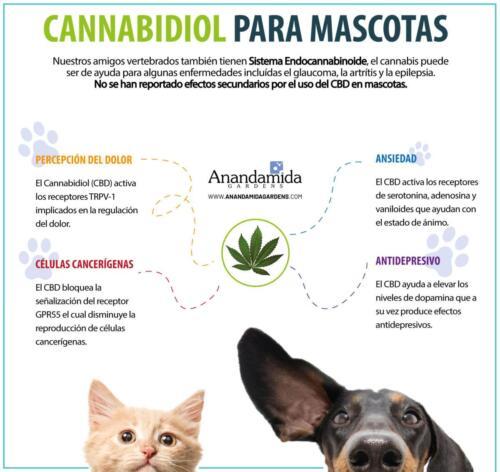 Cannabis y Mascotas
