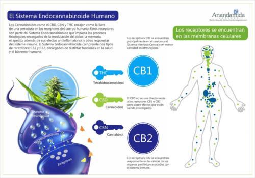 Receptores Endógenos