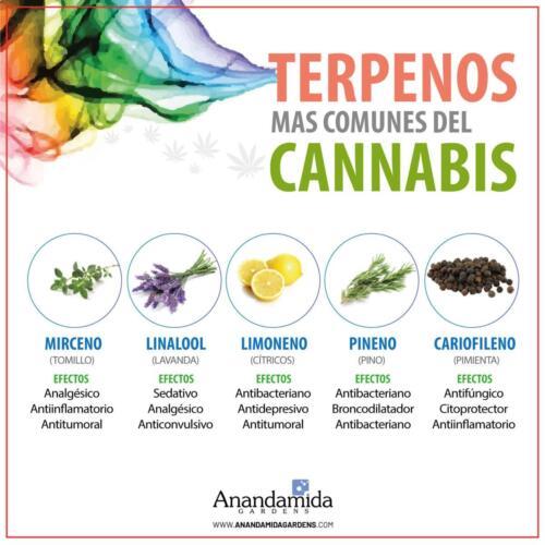 Terpenos del Cannabis